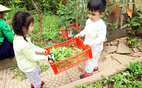 Cùng nhau đưa rau về bếp để chuẩn bị cho một bữa ăn ngon mát nào!