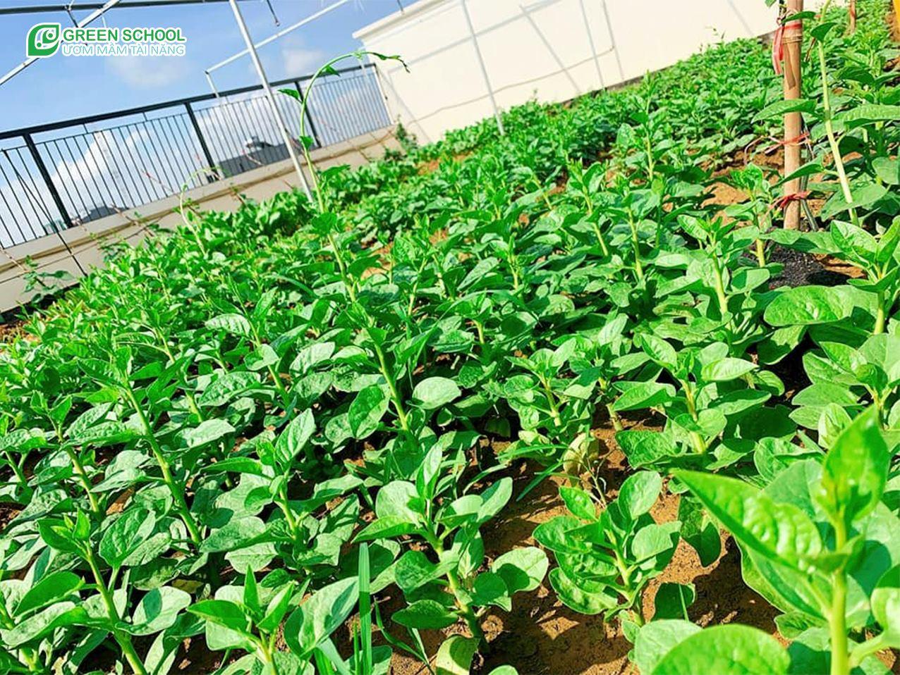 Khu vườn trên mây cung cấp nguồn thực phẩm đảm bảo chất lượng